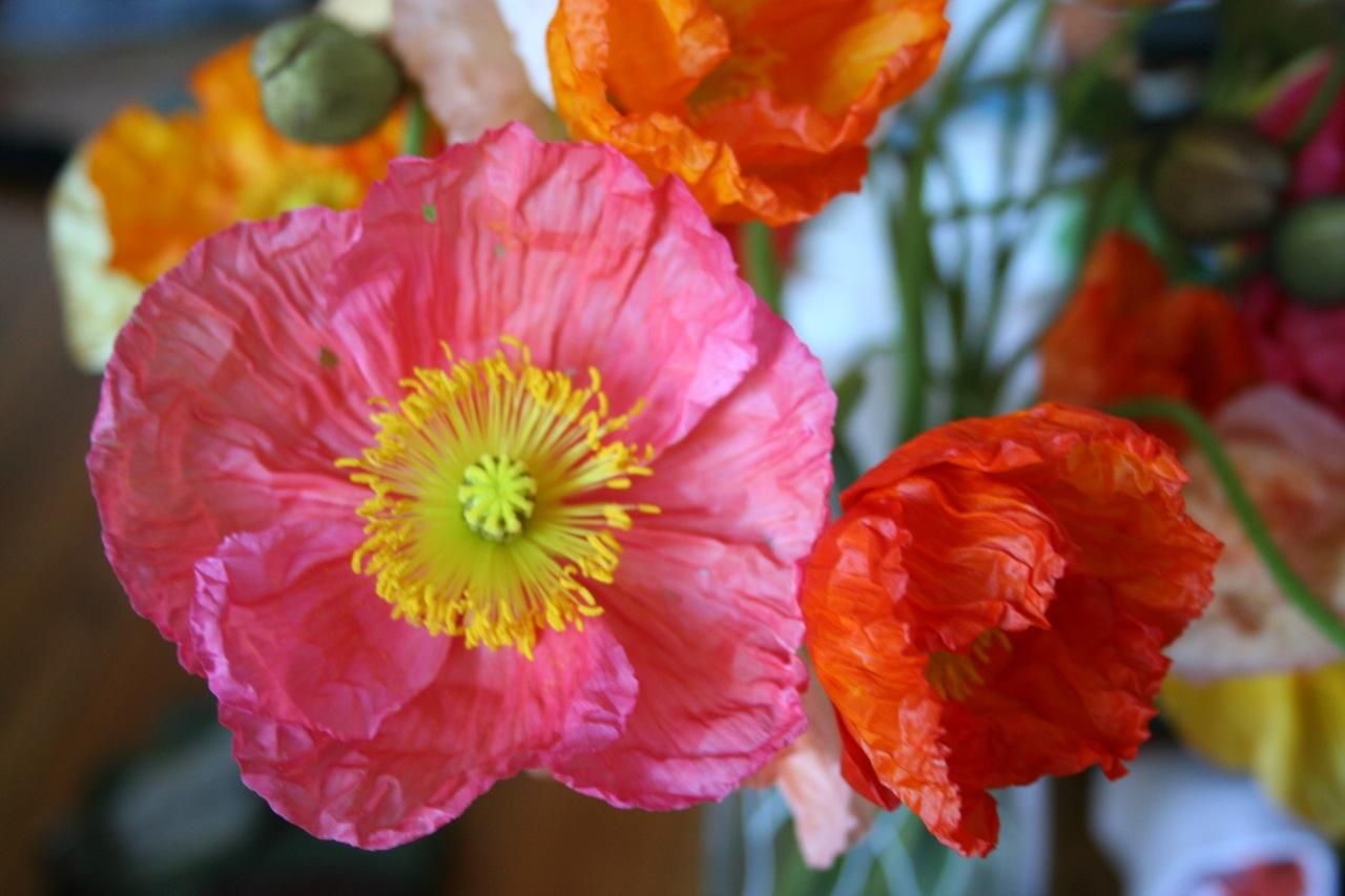 Spring Flowers City Coeur